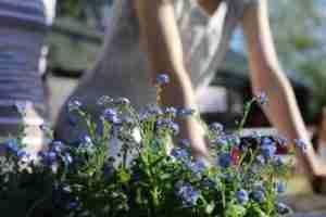 Lawn Fertilization services - Portland